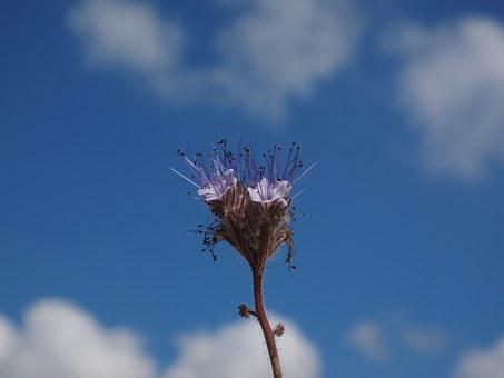 Bueschelschoen, Blossom, Bloom, Violet